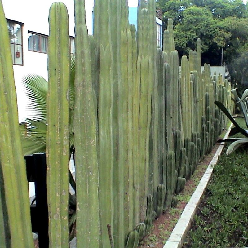 Post: Mexican Fence Post